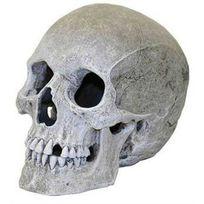 Rosewood - Décor pour Aquarium Crâne d'Humain Très Réaliste