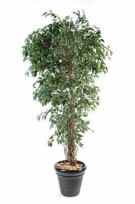 artificielflower arbre artificiel ficus lianes petites. Black Bedroom Furniture Sets. Home Design Ideas