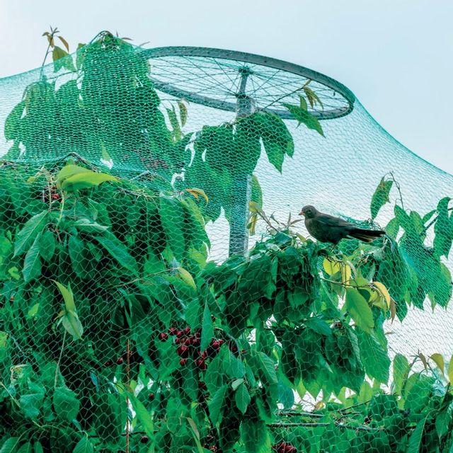 decamp 39 filet de protection des arbres fruitiers pas cher achat vente engrais entretien. Black Bedroom Furniture Sets. Home Design Ideas