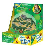 Insect Lore - Ladybug Land
