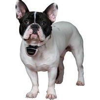 Eyenimal - Caméra pour animaux Pet Cam