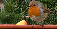 Guide nourrir oiseaux