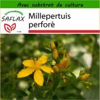 Saflax - Millepertuis perforé - 300 graines - Avec substrat de culture aseptique - Hypericum perforatum