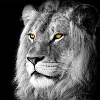Artis - Toile imprimée Lion Noir & Blanc 90 x 90 cm