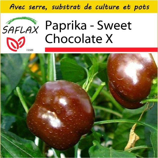 Saflax Kit de culture - Paprika - Sweet Chocolate X - 10 graines - Avec mini-serre, substrat de culture et 2 pots - Capsicum an