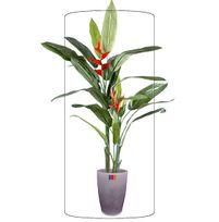 plante exotique exterieur achat plante exotique exterieur pas cher rue du commerce. Black Bedroom Furniture Sets. Home Design Ideas