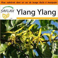Saflax - Jardin dans le sac - Ylang Ylang - 10 graines - Avec substrat de culture dans un sac de levage facile à manipuler Cananga odorata