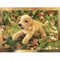 Folkmanis - Puppets - 2833 - Marionnette Et ThÉÂTRE - Yellow Labrador Puppy