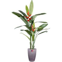 plante exotique pas cher