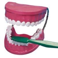 Vinco Educational - la bouche - les dents + brosse a dent geante