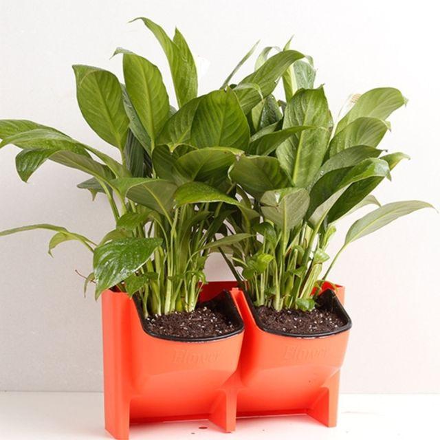 wewoo pot de fleur rouge mur v g tal vertical int rieur. Black Bedroom Furniture Sets. Home Design Ideas