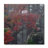 Boniday - Tableau photo érable du japon 30 x 30 cm