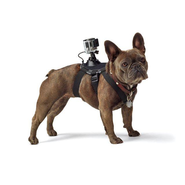 gopro harnais pour chien adogm 001 noir pas cher achat vente tous nos autres accessoires. Black Bedroom Furniture Sets. Home Design Ideas