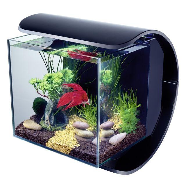 Table Basse Avec Aquarium Intgr. Affordable Aquarium Modle Cayman ...