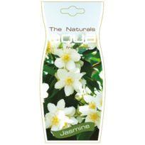 Pour Natural À Aqua Désodorisant Voiture Accrocher Fleur Diffuseur Odeur Jasmin 6g7ybf