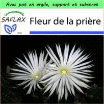 Saflax - Jardin dans la boîte - Fleur de la prière - 40 graines - Avec pot en argile, support, substrat de culture et engrais - Echinopsis mirabilis