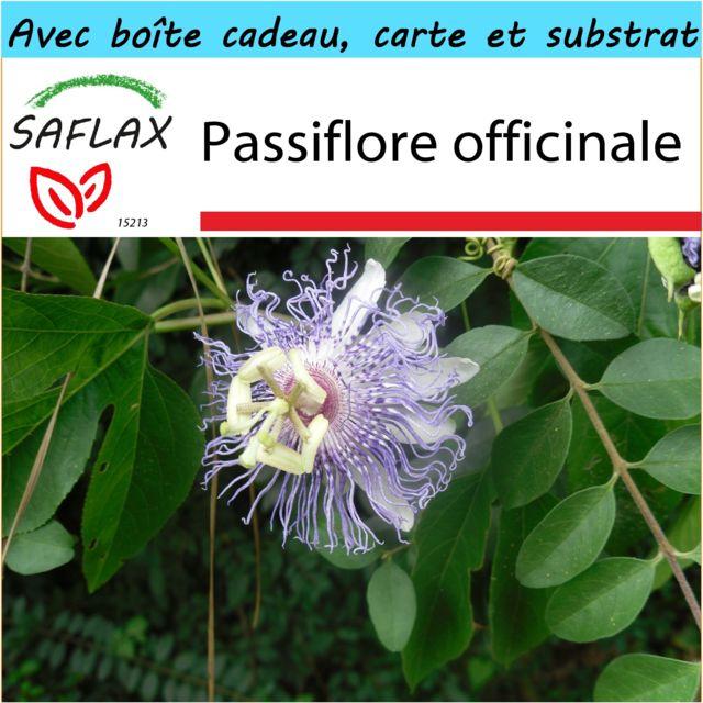 Saflax - Kit cadeau - Passiflore officinale - 5 graines - Avec boîte cadeau / d'expédition, autocollant d'expédition, carte cadeau et substrat de culture - Passiflora incarnata