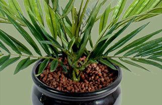 Catégorie graines plantes arbres