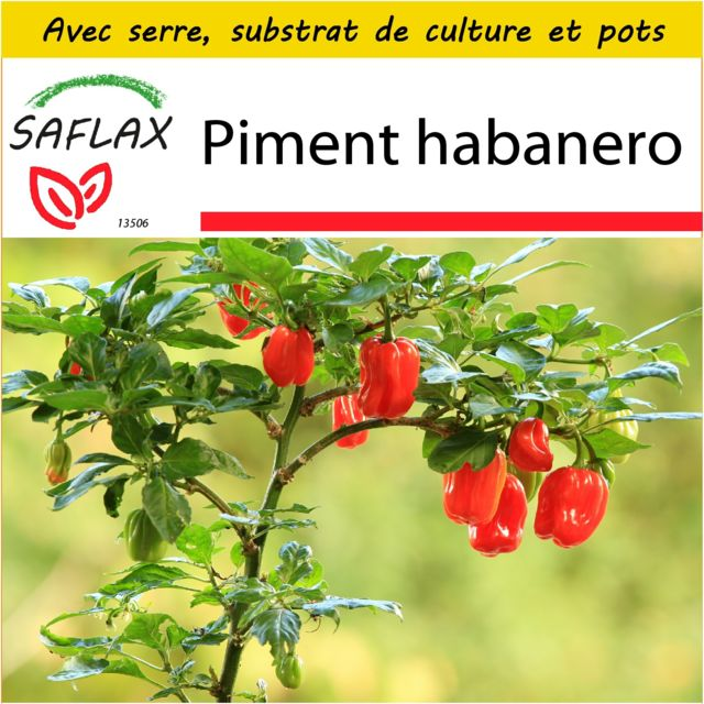 Saflax Kit de culture - Piment habanero - 10 graines - Avec mini-serre, substrat de culture et 2 pots - Capsicum chinense