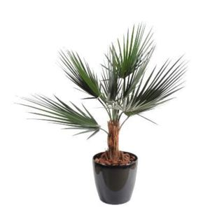 Artificielflower palmier artificiel washingtonia 90cm for Palmier artificiel pas cher