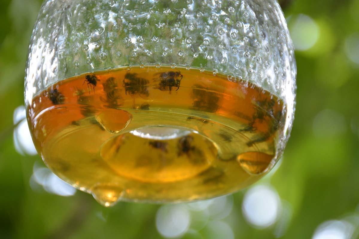 Attrape-guêpe en verre grand modèle