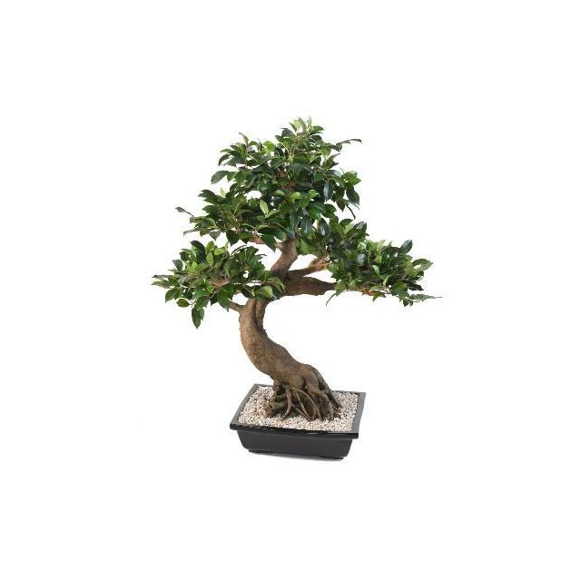 artificielflower bonsa artificiel arbre miniature ficus en coupe plante d 39 int rieur. Black Bedroom Furniture Sets. Home Design Ideas