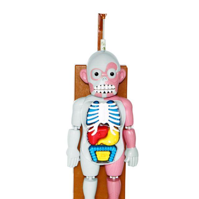 Generic Spoof Toys Tricky Effrayant Modèle du corps humain Toy Terreur Organe Dummy Musique Table de jeu