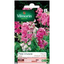 Vilmorin - Sachet graines Pois vivace varié