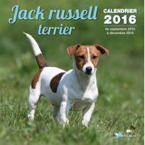 Artemis - jack russel terrier 2016