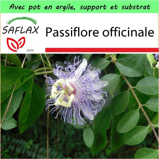 Saflax - Jardin dans la boîte - Passiflore officinale - 5 graines - Avec pot en argile, support, substrat de culture et engrais - Passiflora incarnata
