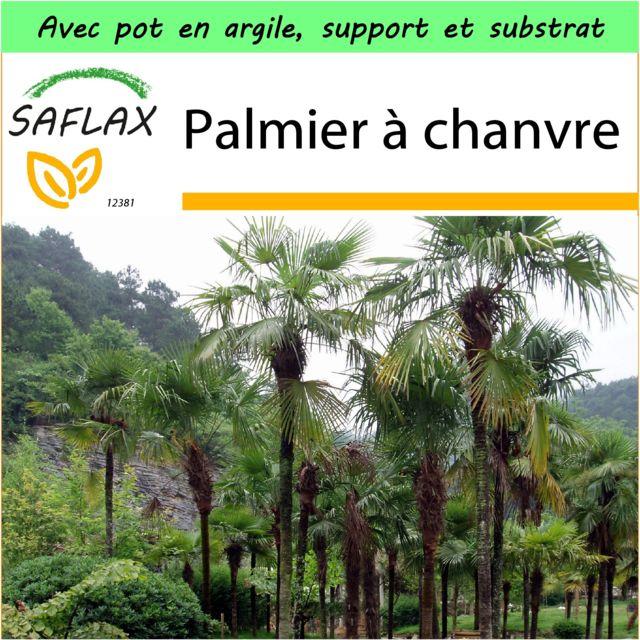 Saflax Jardin Dans La Boite Palmier A Chanvre 10 Graines