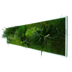 Tableau vgtal mural pas cher affordable great cadre vgtal for Flowall pas cher