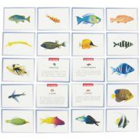 """Editions Lito - images """"les poissons"""" - boite de 100"""