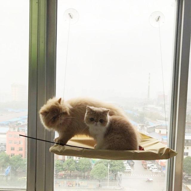 Wewoo Ventouse Style Simple Fenêtre Cat Hamac Taille 55 X 35cm