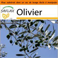 arbre olivier en pot achat arbre olivier en pot pas cher soldes rueducommerce. Black Bedroom Furniture Sets. Home Design Ideas