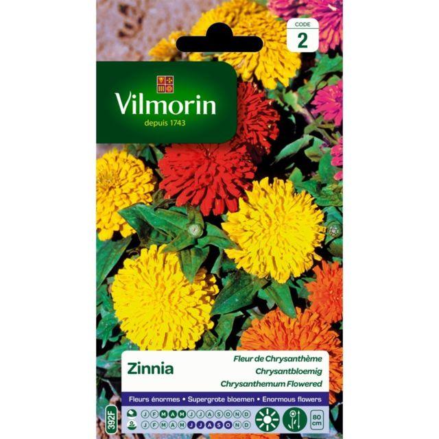 Vilmorin Zinnia Fleur De Chrysantheme Pas Cher Achat Vente