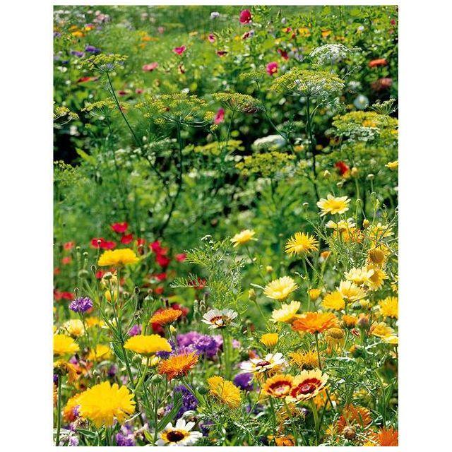 Willemse France Mélange de fleurs spécial oiseaux