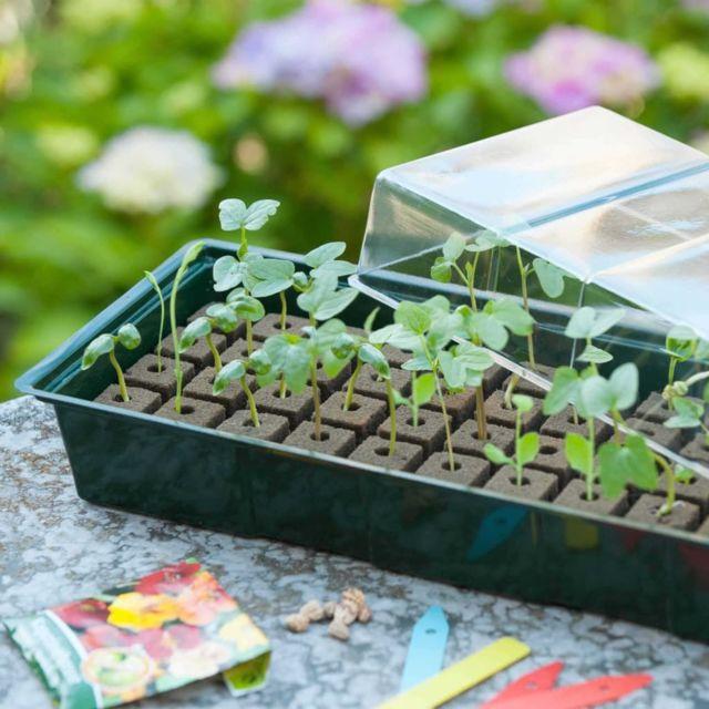 Icaverne Kits de plantation selection Kit de mini propagateur 4x16 cellules